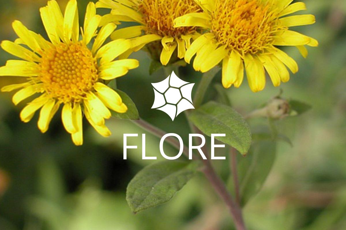 Flore Isles du Drac