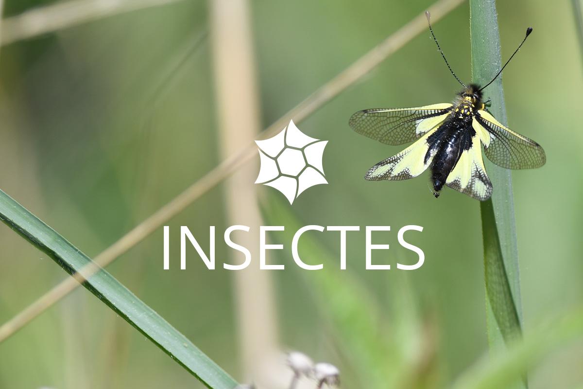 Insectes Isles du Drac