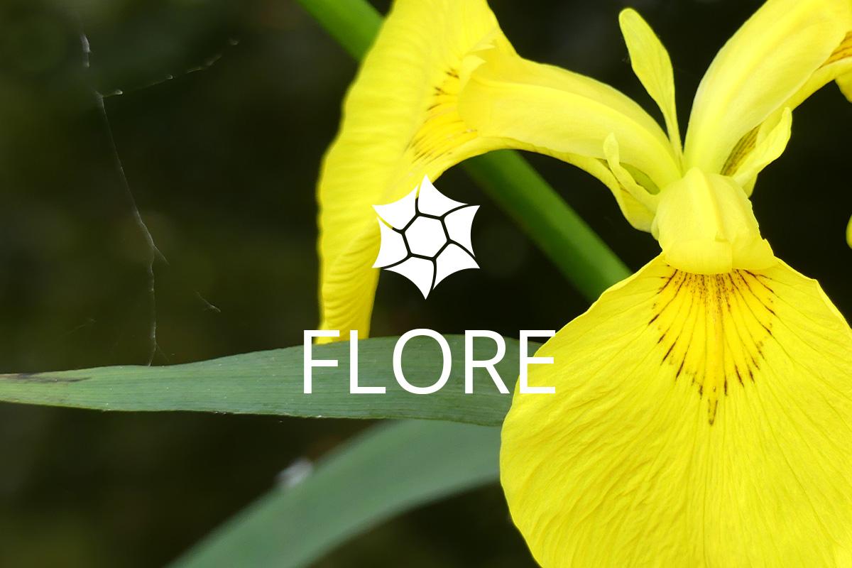 Flore Haute-Jarrie