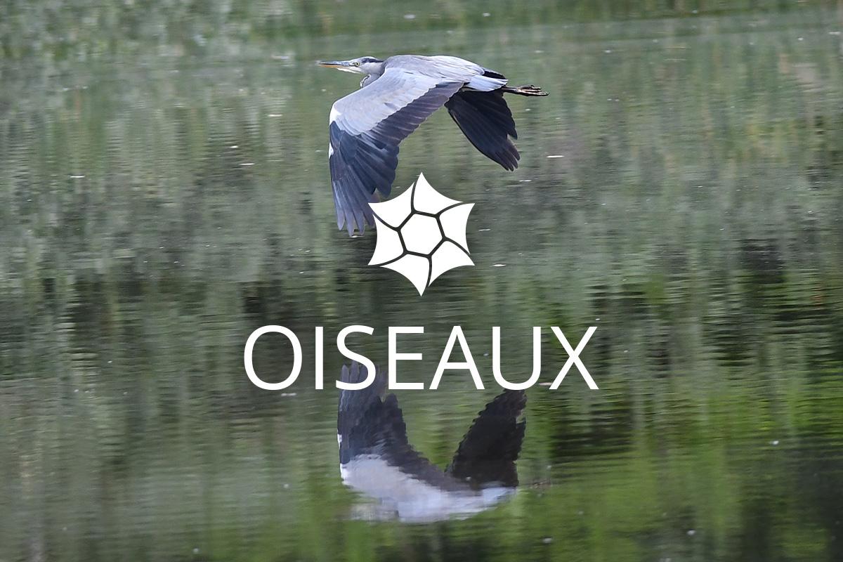 Galerie photo Oiseaux RNR Haute-Jarrie