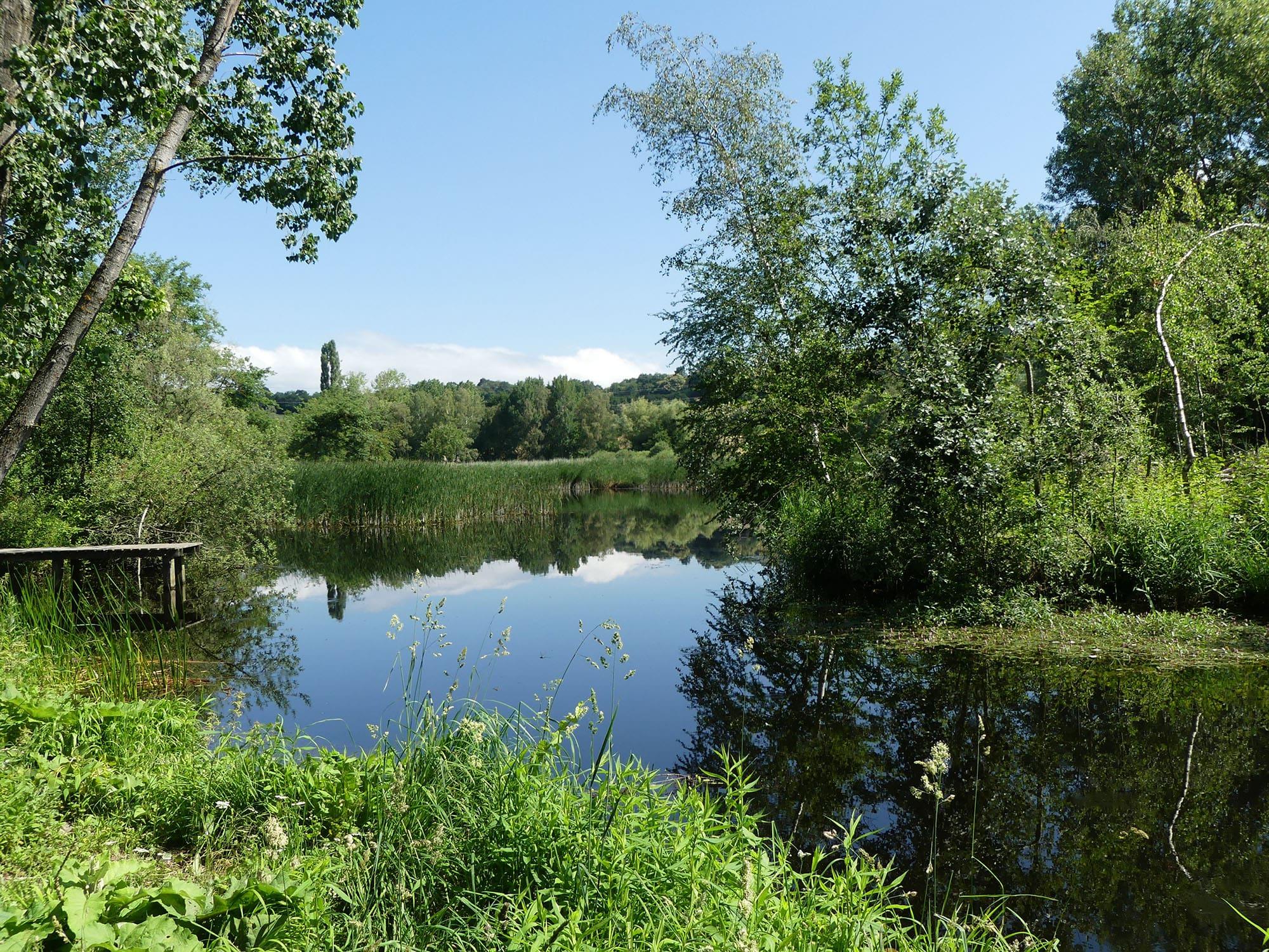 La réserve naturelle régionale de l'étang de Haute-Jarrie