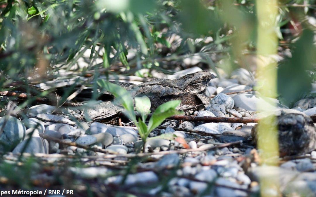 Période sensible pour la faune sauvage